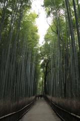 竹林の道 #1
