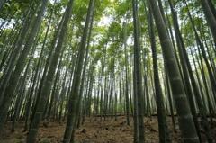 竹林の道 #2