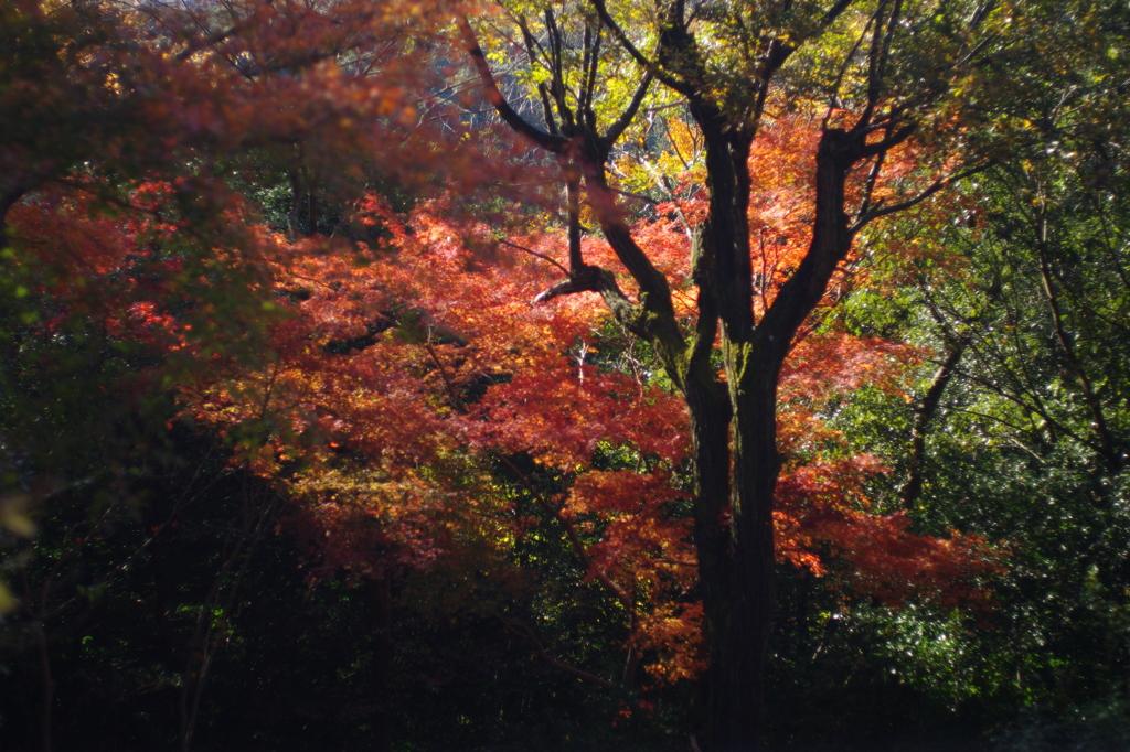 稲荷山の森の中