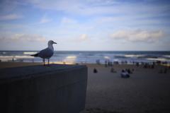 ゴールドコーストのかもめ オーストラリアの風景写真