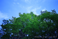 東京都庭園美術館の空 CANON RF35mm F1.8
