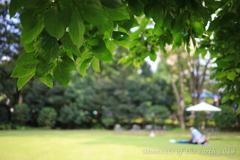 東京都庭園美術館 夏の思い出