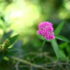 朝の花 EOSRP RF35mmF1.8