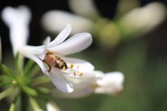 花と蜂 オーストラリアの風景写真