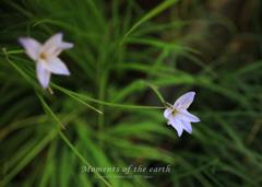 古民家の花