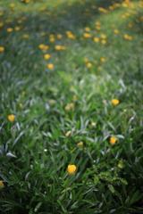 小さな花 オーストラリアの風景写真