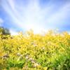 青空と光の葉 オーストラリアの風景写真