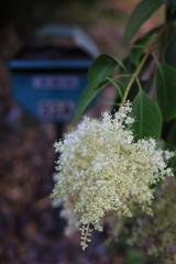 ポスト前の花 オーストラリアの風景写真