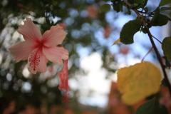 ブリスベンの花 オーストラリアの風景写真