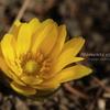 地面で咲く/林芙美子記念館