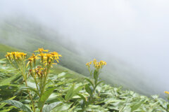雲の中の花