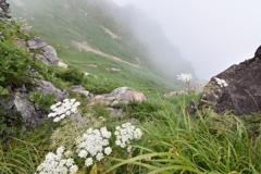 峪に咲く花