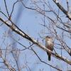 富士スピードウェイの野鳥②