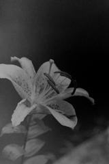 「PEN-F 試写 01」 OLY PEN-F (film)