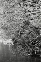 「pond」 (film)