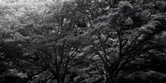 「公園で」 (film)