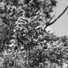 「春風に吹かれて」 (digital)
