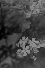 「PEN-F 試写 02」 OLY PEN-F (film)