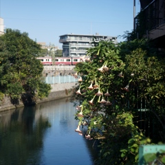 「京急沿線」