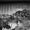 「Plant Window」 (film)
