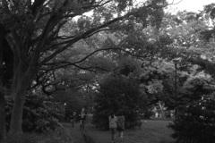 「神奈川公園」 (fflm)