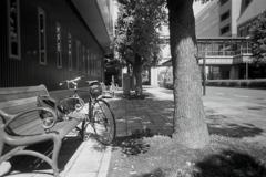 「プラレンズの世界(Kodak)」 (film)