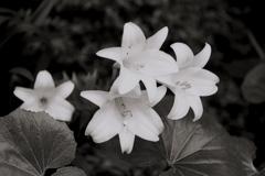 「flower」 (film:HR20)