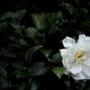 「1/26 花撮り01」