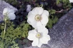 「街角Flower」 (film)