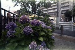 「ゆるphoto: 街角flower」 (film)
