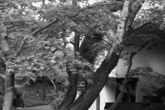 「散歩フォト:能舞台 庭」 (film)