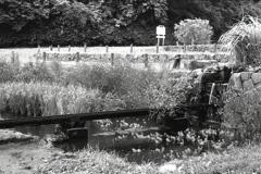 「秋の公園(少し前)」 (film:HR20)