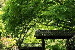 「4/18 散歩フォト: 能舞台 門」 (digital)