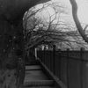 「02/02 街歩き10」 (film)