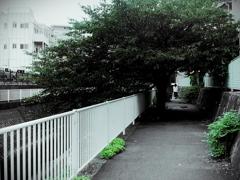 「レストア試写18」 RICOH 35L (film)