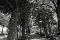 「春の銀杏並木」 (film)