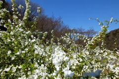 「春」 (digital)
