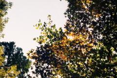 「秋色 01」 OLY PEN-FT (film)