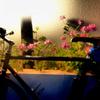 「自転車通勤14ケ月目」 (digital)