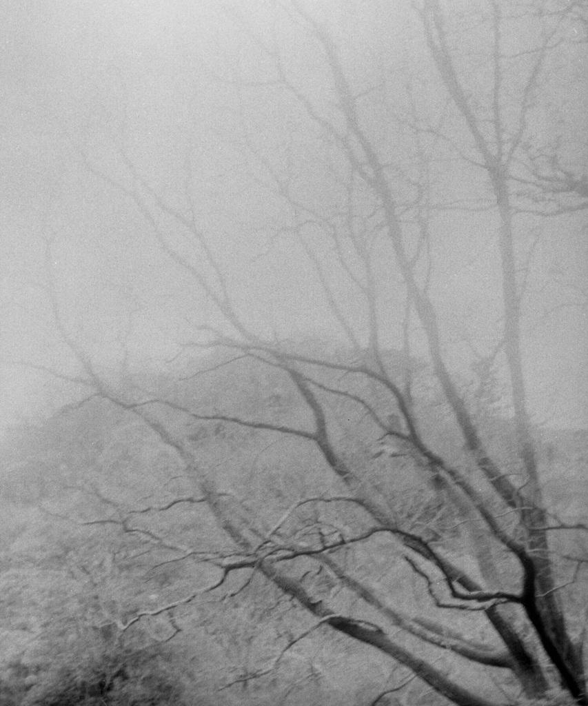 「冬の散歩道」 (film:HR20)
