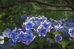 「街角flower」 (digital)