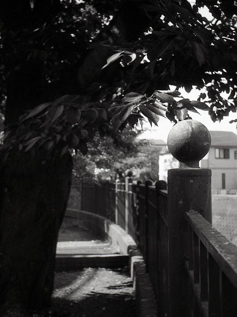 「Halfでいこう: 桜の並木道 2」 (film)