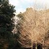「冬の公園歩き06」 (film)