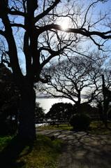 能古島2020 光る樹木