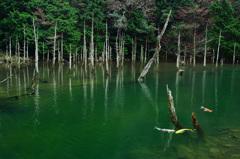 一ノ俣桜公園2020 1月-2 蒼霧鯉池⑥