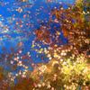 環境芸術の森2020 秋-2 池と落ち葉と青空