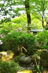 大興善寺2021 4月-3 つくばい