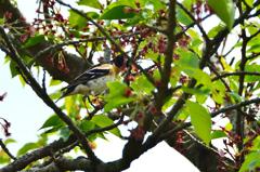 白野江2021 4月-4 野鳥