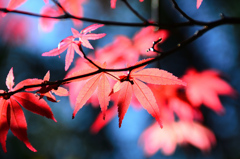 白野江2020 10月-2 紅葉②