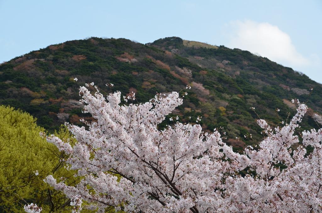 森林公園2018 桜&小文字山